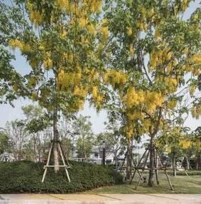 泰国现代景观设计(三)