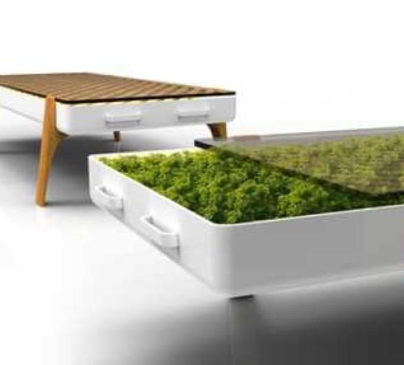 植物桌 可以种点多肉